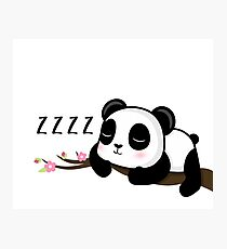 ZZZZ! Sleeping Panda Photographic Print