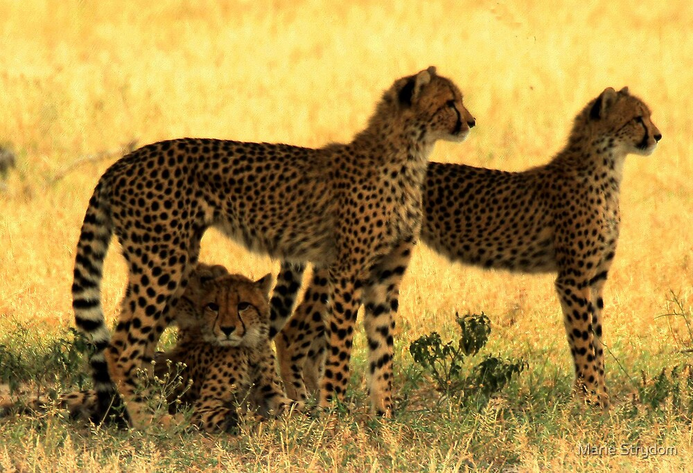 Brother of the African Plains by Marie Strydom