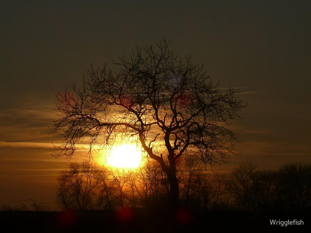 sunset by Wrigglefish