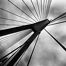 Anzac bridge by Matthew Bonnington