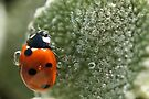 Ladybug and Bubbles by Betsy  Seeton