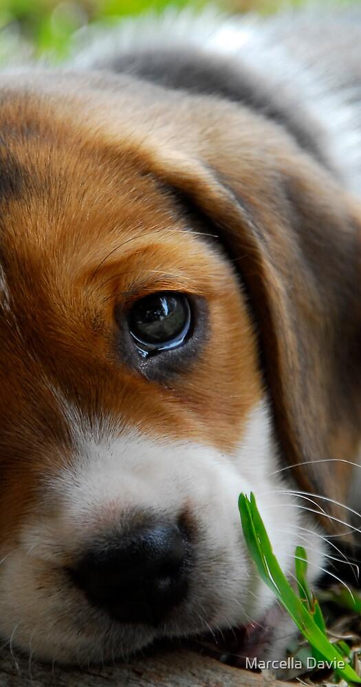 Puppy by Marcella Davie