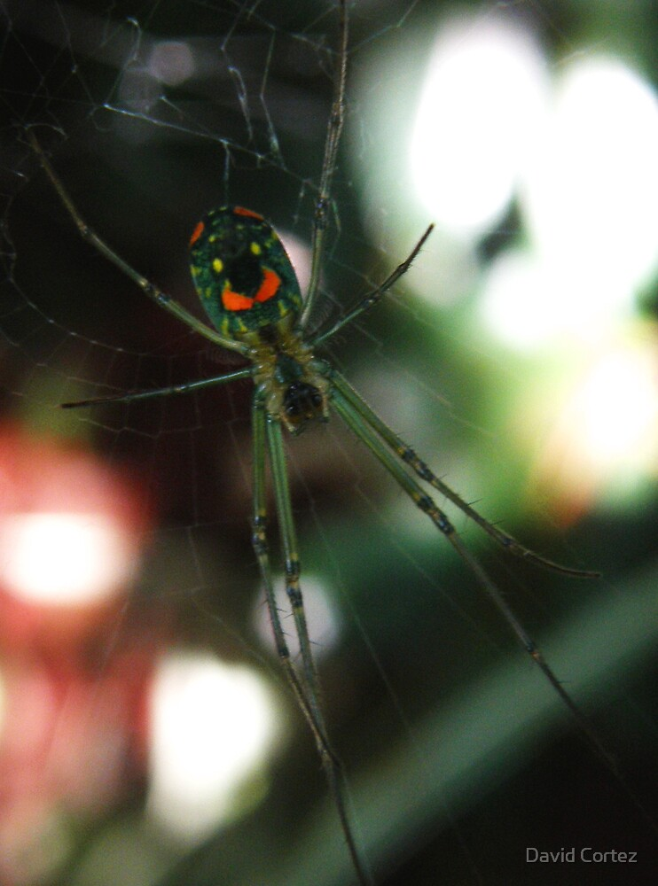 Smiling Spider by David Cortez