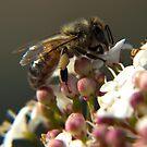 Working Bee by Nina1962
