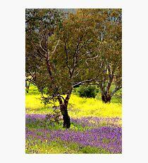 Springtime Colours Photographic Print