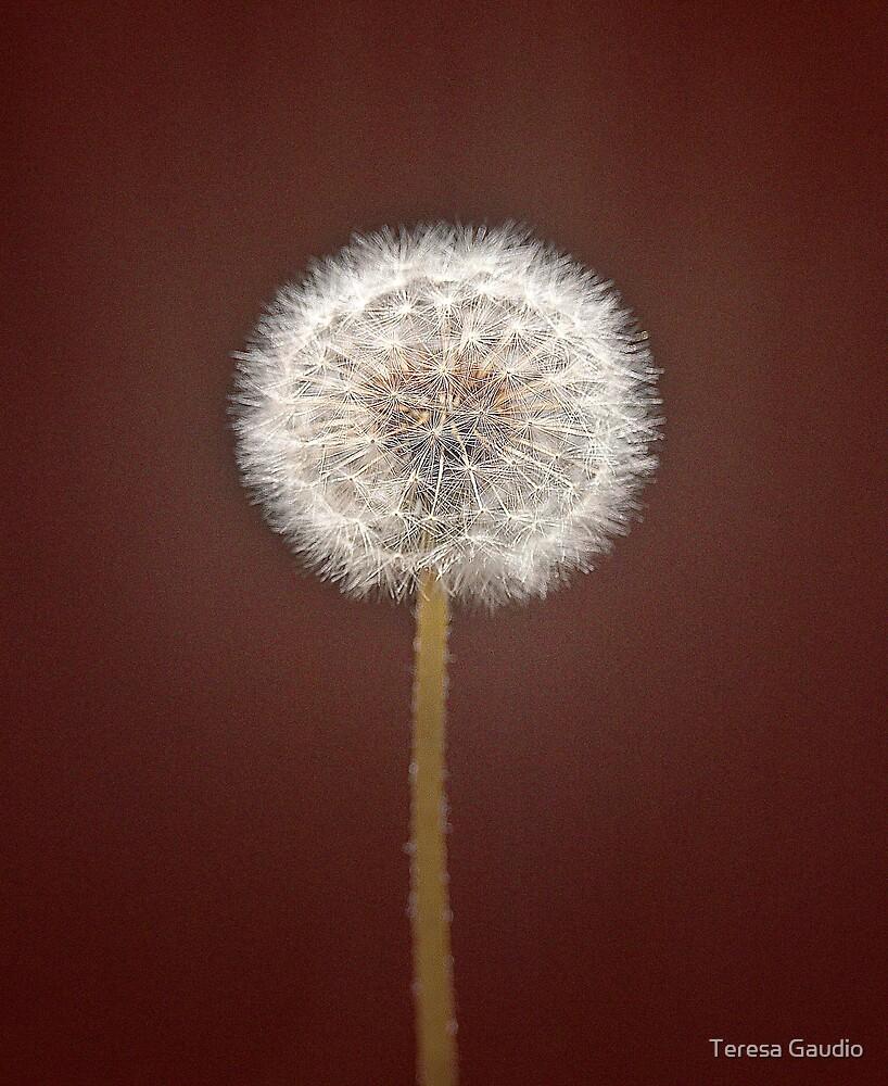 Make a wish by Teresa Gaudio