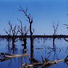 Land of Bone Trees by Joumana Medlej