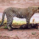 Predator by Joumana Medlej