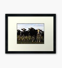 What have you got for us? Framed Print