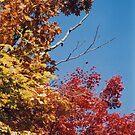 Three Tones of Autumn by Joumana Medlej