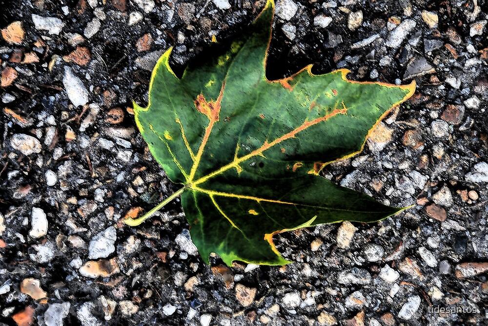 Fall by tidesantos
