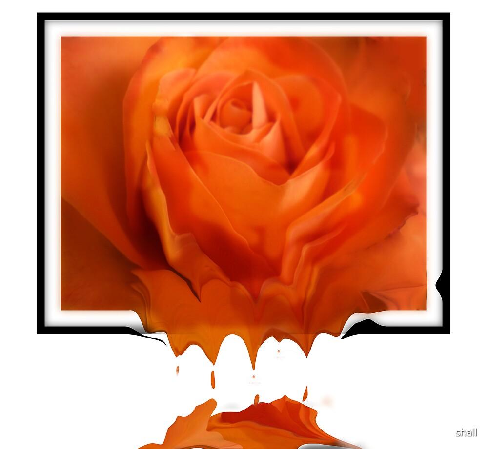 Liquid Rose by shall