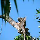 iguana by Xarran