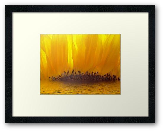 Sunflower Sunset by shall