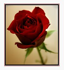 The Reddest Rose Photographic Print
