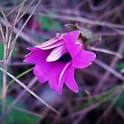 True love asks for nothing by FlowersRHidden