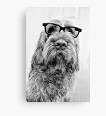 Brown Roan Italian Spinone Dog Head Shot with Glasses Canvas Print