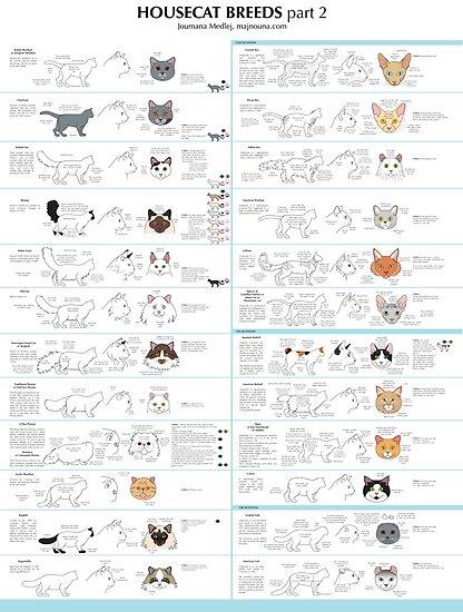 Housecat Breeds part 2 by Joumana Medlej