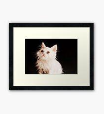 Adorable wet kitty Framed Print