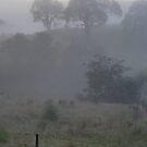 Foggy Morning again  by MIchelle Thompson
