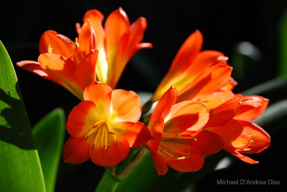 Orange Flowers by Michael D'Andrea Diaz