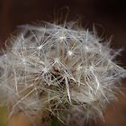 dandylion macro by BigAndRed