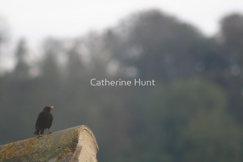 Blackbird by Catherine Hunt