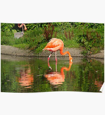 Pretty Flamingo Poster