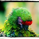 Parrot Face 2 by kalliope94041