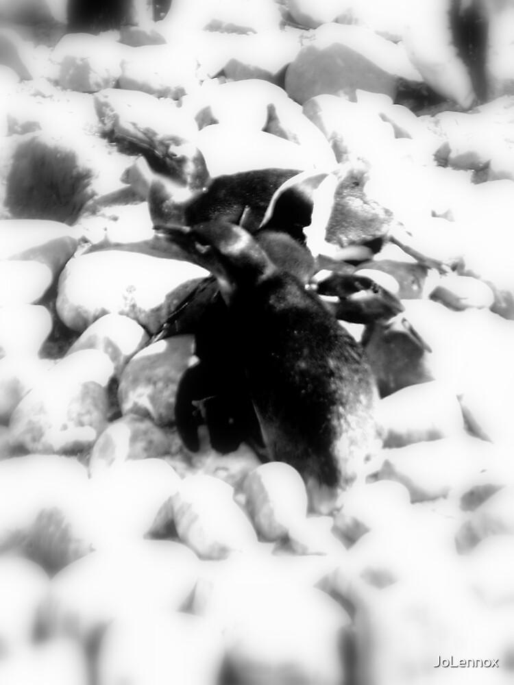 Penguin Love by JoLennox