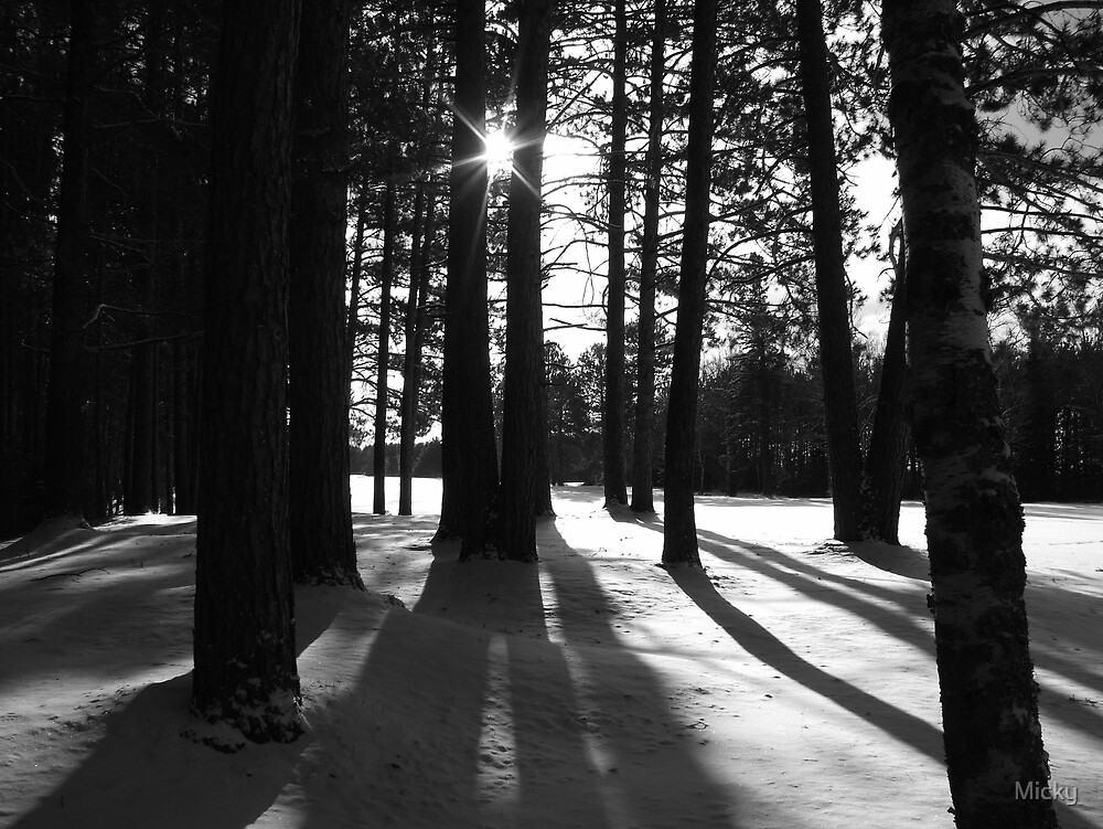 Long winter shadows by Micky