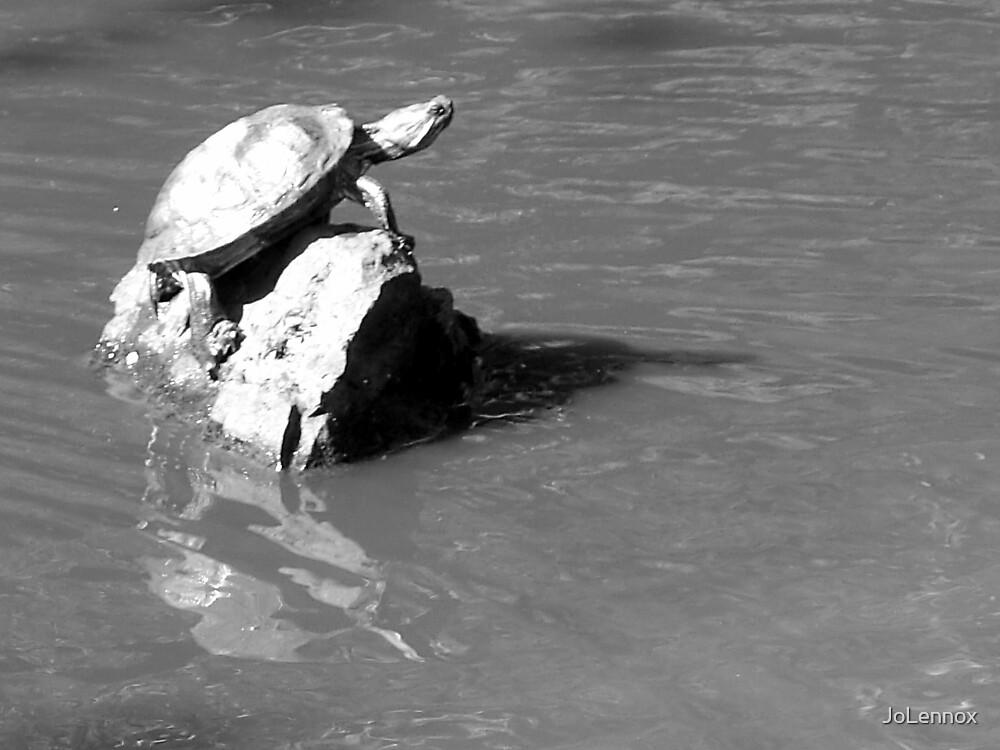 Turtle On The Rocks by JoLennox