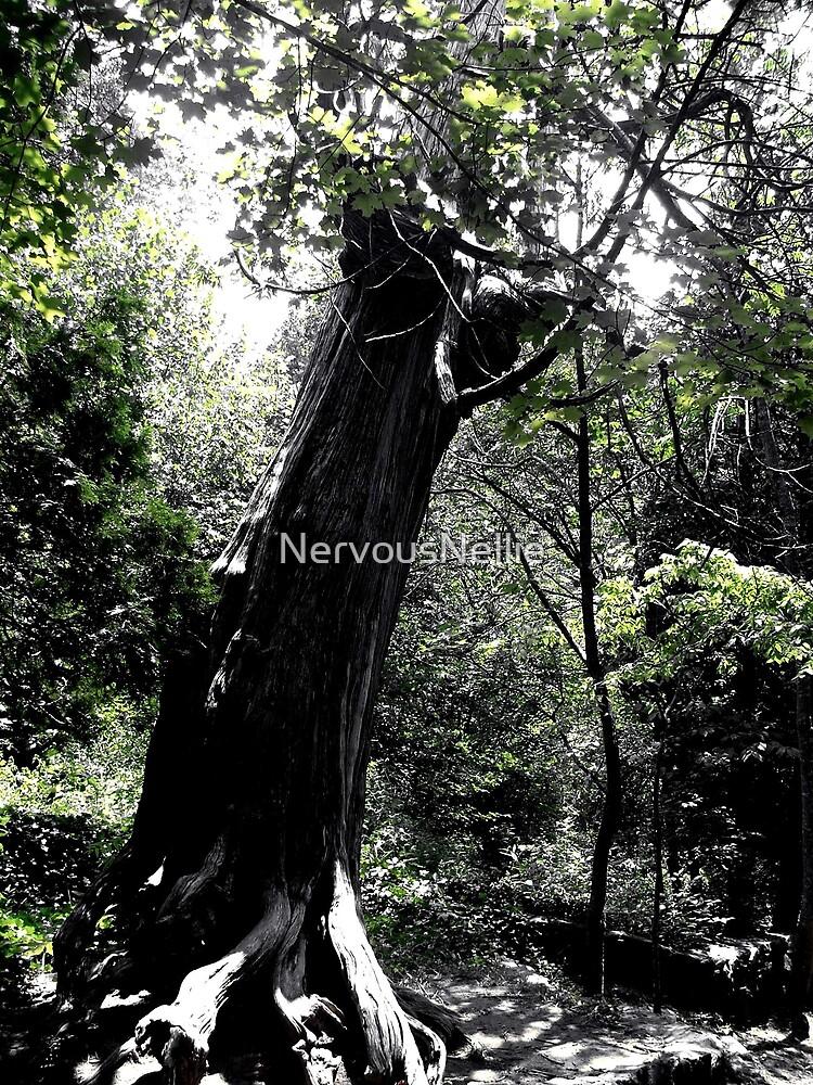 Tree by NervousNellie