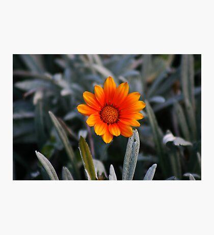 Lady in the Orange Dress Photographic Print