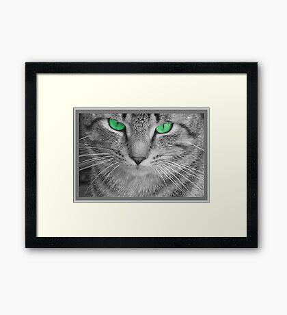 Envious Eyes Framed Print