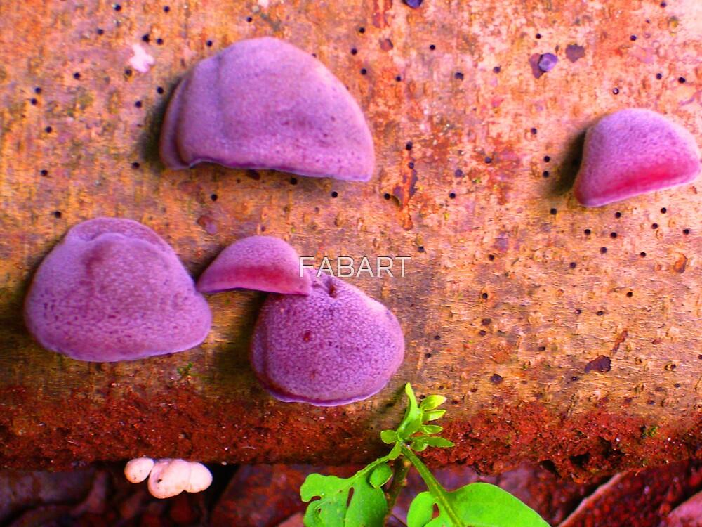 Fungi by FABART