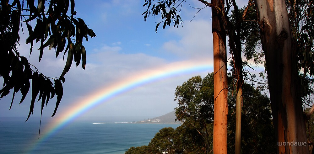 Eucalypt Rainbow by wondawe