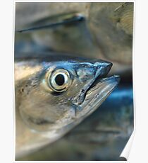 Tuna fish, Fine Art Print, Home Decor, Foto Alta Qualità, Macro, Tonno, Pesce, Photo Poster
