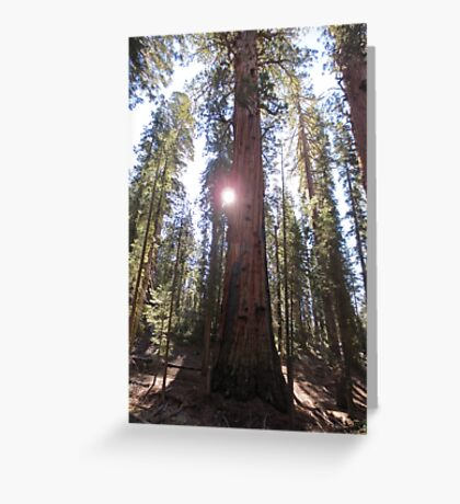 Sunlight Forest Greeting Card