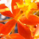 people flower by lindaheldens