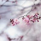 Glimpse of Spring by JennyRainbow