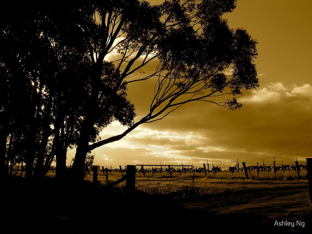 Field of Dreams by Ashley Ng