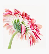 Strawberries and Cream Photographic Print