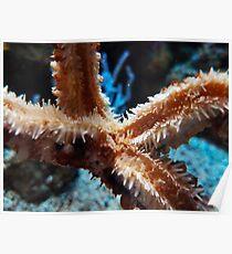 Macro on the starfish Poster