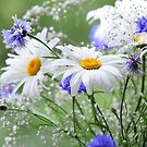 Daisies and Cornflowers by JennyRainbow
