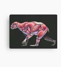 Arctodus Simus Muscle Study (No Labels) Canvas Print