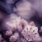 Mountain Laurel by EkaterinaLa
