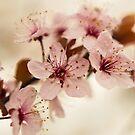 Blossom by EkaterinaLa