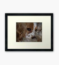 Sierra's Fur Framed Print