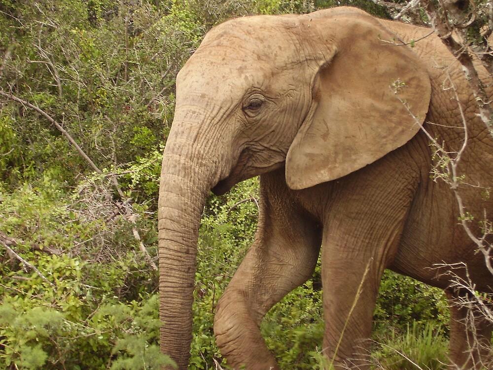 Elephant in the Bushes by HelenBanham